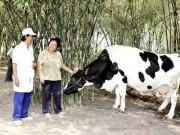 Tháng 1/2015: Vinamilk thu mua gần 20 triệu kilogam sữa