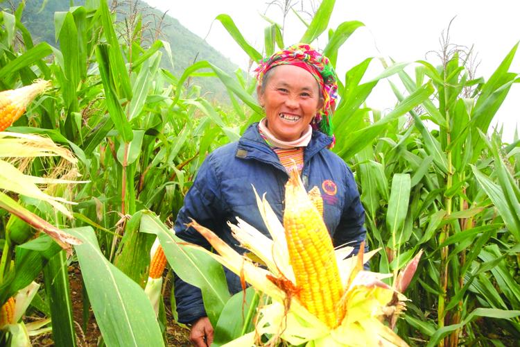 Lào Cai: Hiệu quả từ triển khai Chương trình 135