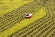 Thu hút đầu tư vào nông nghiệp: Vướng rào cản chính sách