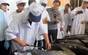 Cá ngừ Việt Nam bị áp thuế cao tại thị trường Nhật Bản