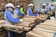 Chủ động nguồn gỗ sạch