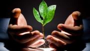 Cơ hội đầu tư vào cổ phiếu ngành nông nghiệp