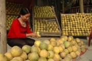 Nâng cao giá trị nông sản xuất khẩu