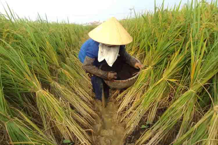 Xuất khẩu gạo: Tập trung vào những chủng loại có thế mạnh