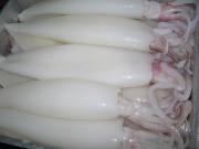 Xuất khẩu mực, bạch tuộc dự kiến đạt 420 triệu USD