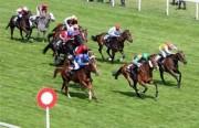 Hướng dẫn kinh doanh đặt cược đua ngựa, đua chó, bóng đá quốc tế