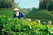 Tuyên Quang: Đột phá tạo lợi thế thu hút đầu tư