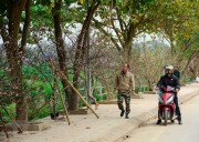 Nhộn nhịp thị trường đào rừng nơi phố núi Mường Thanh