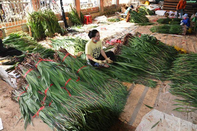 Chất lượng vượt trội, người trồng hoa tết Đà Lạt lãi lớn - Ảnh 1.