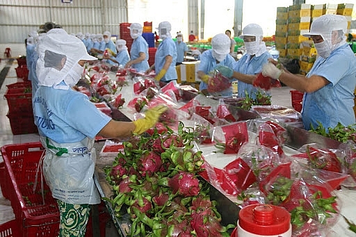Xúc tiến xuất khẩu sang thị trường Ấn Độ: Hướng gỡ khó kịp thời