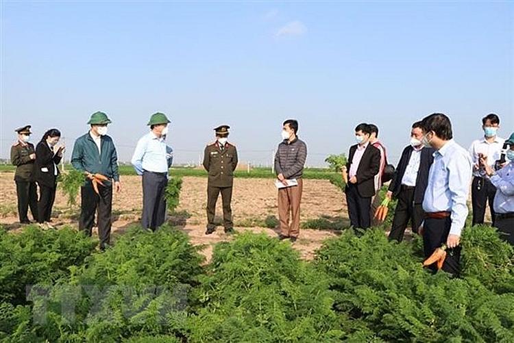 Lãnh đạo tỉnh Hải Dương kiểm tra tình hình sản xuất, tiêu thụ cà rốt tại xã Đức Chính, huyện Cẩm Giàng