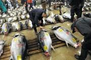 Tiêu chuẩn dư lượng kháng sinh trong thủy sản: Nhật Bản áp cao gấp 10 lần EU