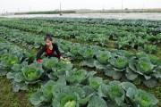 Nâng chất cho hợp tác xã nông nghiệp