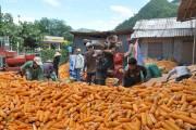 Nghệ An: Nghịch lý xuất nhập khẩu nông sản