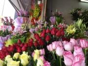gia hoa tuoi tang manh dip 83