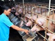 Giá lợn, gà tăng dần