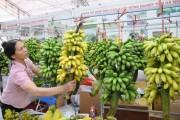 Xây dựng thương hiệu cho trái chuối xuất khẩu