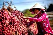 Hành tím Vĩnh Châu giảm giá mạnh
