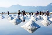 Bảo đảm nguồn cung muối công nghiệp: Xây dựng vùng nguyên liệu chất lượng cao