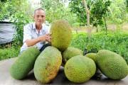 Mít Thái tăng giá kỷ lục