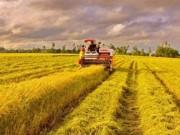 Tìm lối thoát cho xuất khẩu nông sản