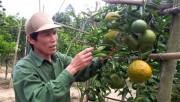 Cam Sơn Lang thu tiền tỷ