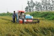 Thái Bình: Nông nghiệp công nghệ cao hút vốn đầu tư