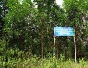 Đề xuất quy định khai thác, tận thu gỗ rừng trồng thực nghiệm khoa học