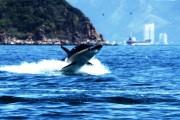 Hòn Tằm Nha Trang: Thiên đường giải trí biển