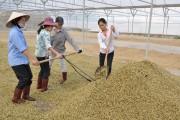 Xuất khẩu nông - lâm - thủy sản: Nỗ lực bứt phá