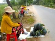Dưa hấu Việt khó xuất sang Trung Quốc vì không cạnh tranh nổi với dưa Lào, Myanmar