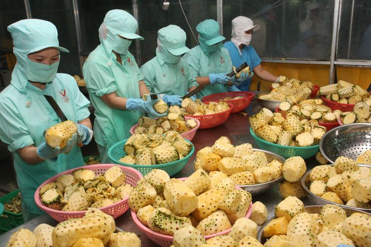 Xuất khẩu rau, quả: Nỗ lực cho mục tiêu 3 tỷ USD