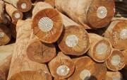 Hệ thống bảo đảm gỗ hợp pháp Việt Nam
