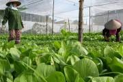 Hội Nông dân Việt Nam: Kết nối tìm thị trường cho nông sản Việt