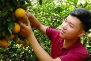 Khuyến khích đoàn viên thanh niên khởi nghiệp: Thực tiễn ở Bắc Giang