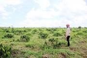 Tái phân bổ đất nông, lâm trường: Vì sao vẫn dè dặt ?