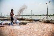Mô hình hợp tác công - tư trong phát triển thủy sản: Hiệu quả thiết thực