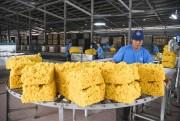 Ngành cao su: Cần chủ động cơ cấu lại sản xuất