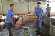 Ngành chăn nuôi lợn - Cần phương án 'giải cứu' bền vững - Kỳ II: Nâng cao giá trị sản phẩm