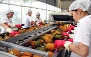 Cơ hội cho rau quả Việt Nam rộng đường sang UAE