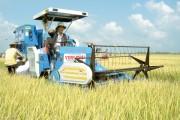 Tạo điều kiện cho doanh nghiệp xuất khẩu gạo
