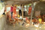 EVN: Đồng hành phát triển nông nghiệp