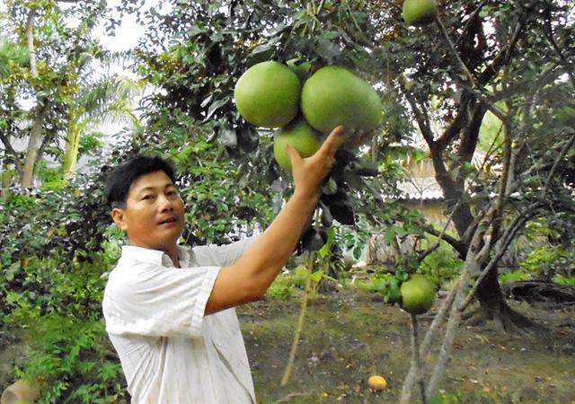 Cần liên kết trong sản xuất cây ăn trái để giảm giá thành sản phẩm