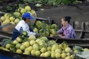 Trái cây ở ĐBSCL 'sốt' giá