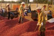 Khuyến công Đăk Nông: Tăng năng lực chế biến nông sản