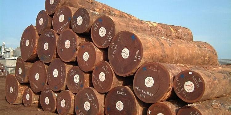 Châu Phi tiếp tục cung cấp nhiều gỗ chưa chế biến cho Việt Nam