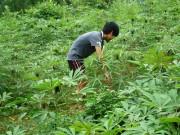 tang thue xuat khau san lat can lo trinh thich hop ky ii