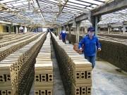 """""""Soi"""" tiềm năng doanh nghiệp vật liệu xây dựng sắp niêm yết"""