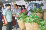 Kết nối cung - cầu: Giải pháp tiêu thụ nông sản hiệu quả