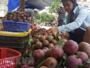 Lào Cai: Mận Tam Hoa tại Bắc Hà vào chính vụ, giá cao